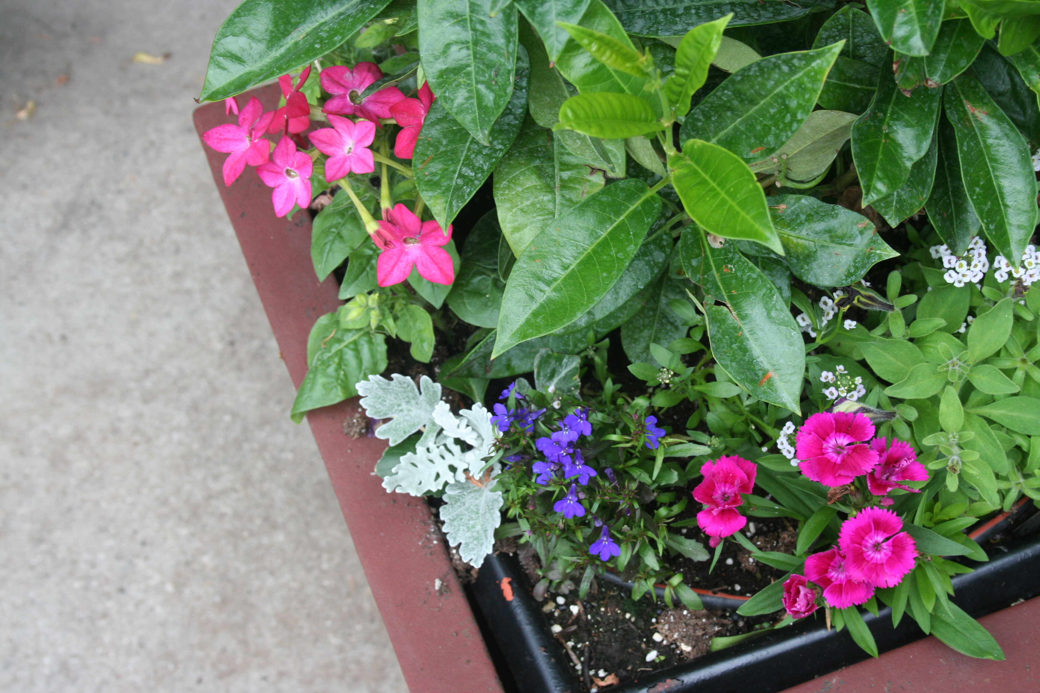 4 easy maintenance tips for a beautiful container garden peterson lawn services - Tips for a lovely garden ...