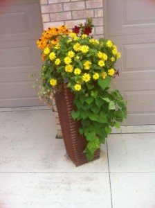 Trailing Plants, Container Garden
