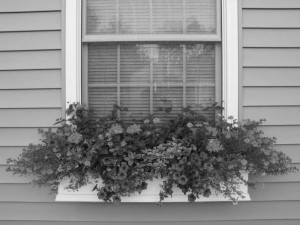 window-flower-boxes-black&white