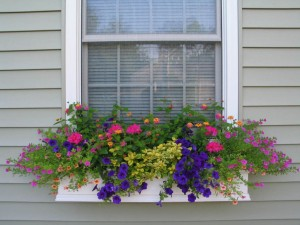 window-flower-boxes-color