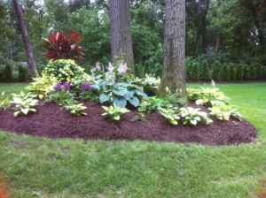 After mulch refreshing